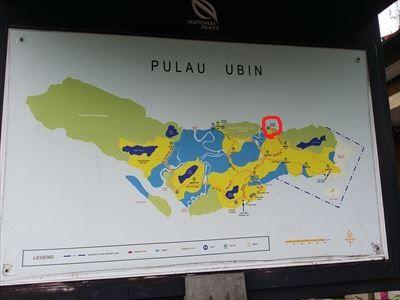 Pulau_Ubin_Mamam